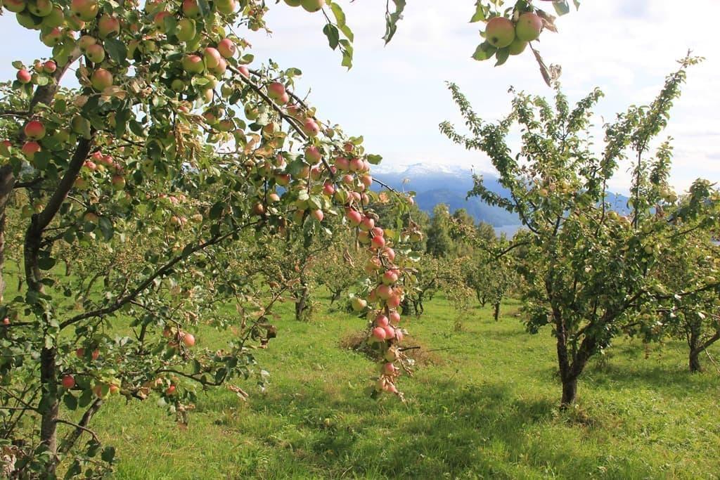 Райские плоды Алтайского заповедника